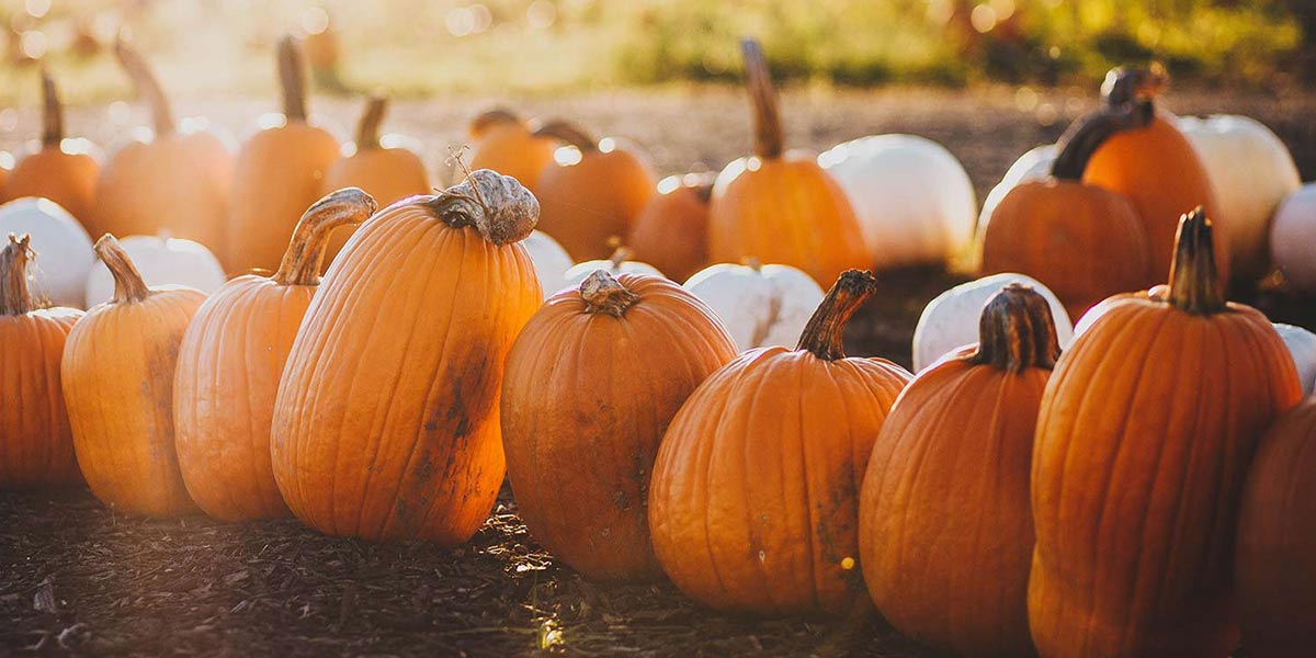 Wholesale Pumpkins Raleigh, Fort Myers - Country Boy Produce